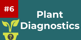 CLICK HERE to Learn about the 20 questions of plant diagnostics in the factsheet found here.  The 20 questions of diagnostics are words to live by when investigating suspected plant problems.
